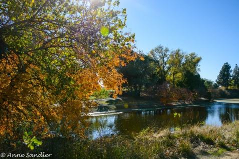Fall colors again.