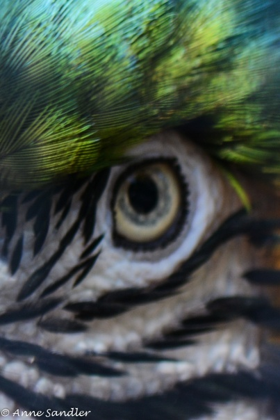 The parrot's eye as I shot through the small square in the cage enclosure.