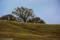 Trees on top of a hill.