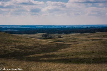 More pasture land.