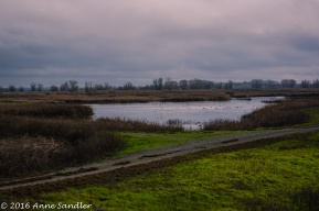 Although more than last year, the water level was still down at the refuge.