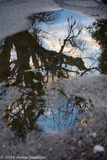 Puddle reflection.