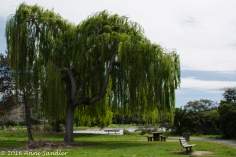 I loved this willow tree.