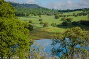 Lovely meadow.