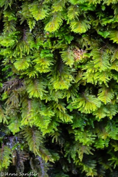 Leafy growth on the bark.