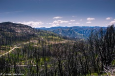 Rim fire devastation.