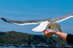 Vanessa, the bird whisperer feeding the gulls french fries.