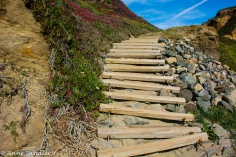 "The ""stairs"" going down to Bodega Head Beach."