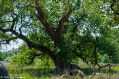 Expressive tree.