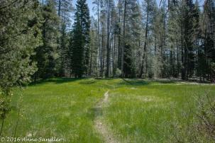 A meadow.