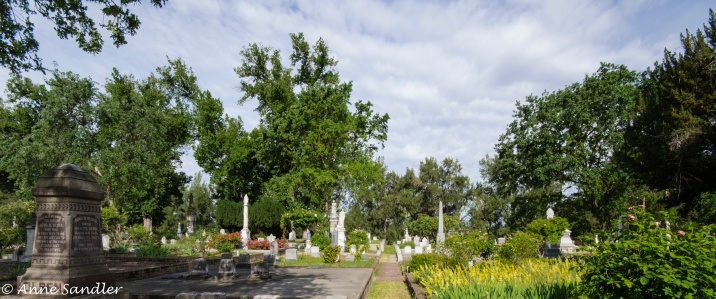 There are plenty of trees in the cemetery.