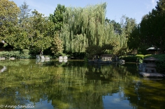 Looking back at the weeping willow.