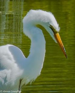 A closer look at this beautiful bird.