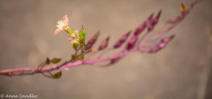 Just a pretty wildflower.
