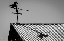 I couldn't resist this weather-vane and shadow.