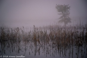 It was very foggy when we arrived at the Consumnes River Preserve.