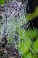 The spider webs glistened with the morning dew.