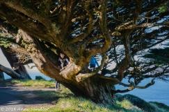 A twisted and fun climbing tree.