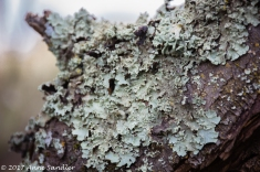 Lichen on the trees.
