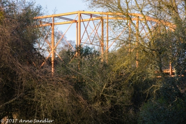 The bridge peeking through the brush.