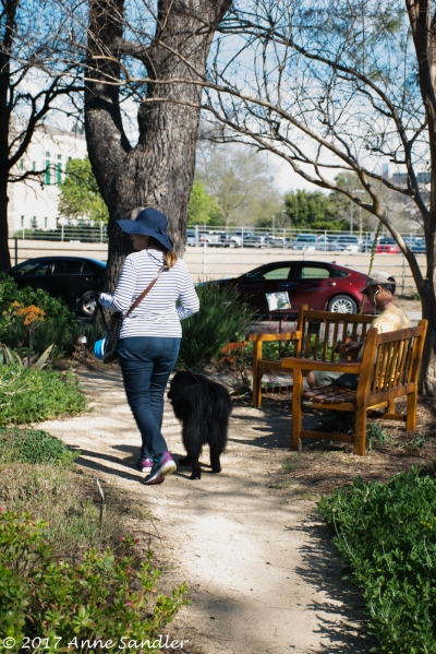 A woman walks her dog through the flower garden.