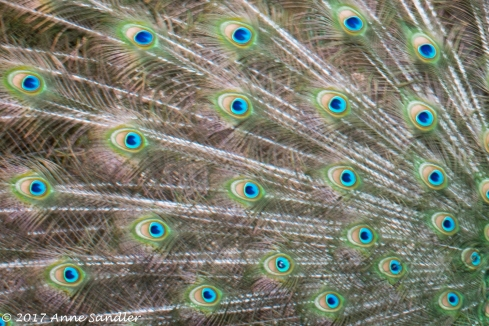 A close look of the feathers.