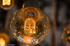 Close up of a bulb.