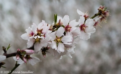 More blossoms.