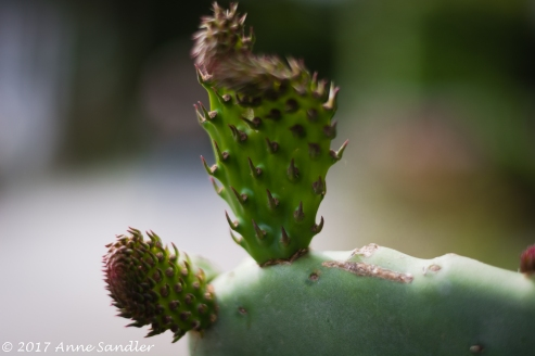 Captured from a cactus bed. Again the smooth bokeh from the 50 mm.