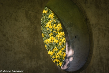 A hole in the wall with Scotch Broom peeking through.
