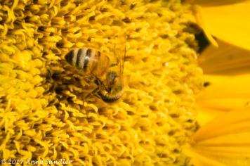 Bees again.