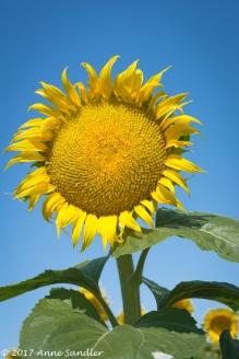 Happy sunny.