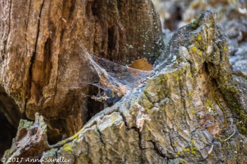 A busy spider adds texture to this tree.