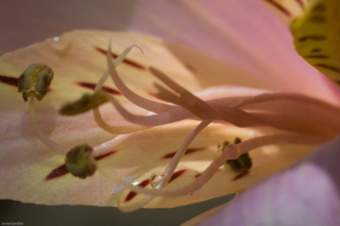 Inside the flower.
