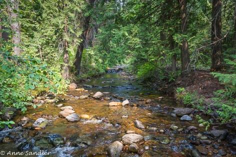 A sunlit creek.
