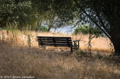 A bench with a river vista.