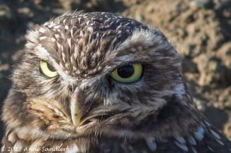 Looking mean!