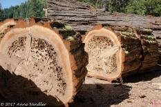 Beautifully textured logs.