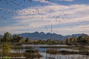 The beautiful marsh lands.