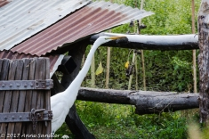 An egret came out from under a small shelter.