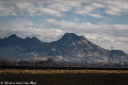 From the car: a view of the Sutter Buttes.