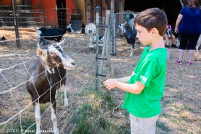 Ryan feeds a goat through the fence.