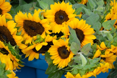 They were selling sunflowers.