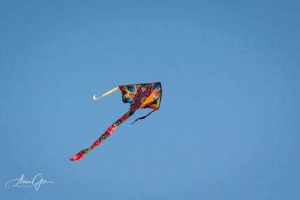 I got a close up of a kite.