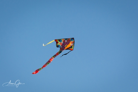 I got a close up of a kite.