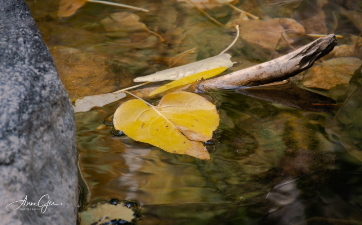 I liked this leaf's reflection in the water.