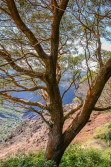 The trees in Kauai were beautiful.